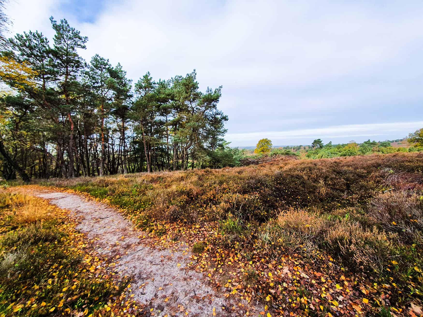 Krista van der horst praktijk voor coaching zwolle 900 1600  wandelcoaching natuurcoaching engelse werk