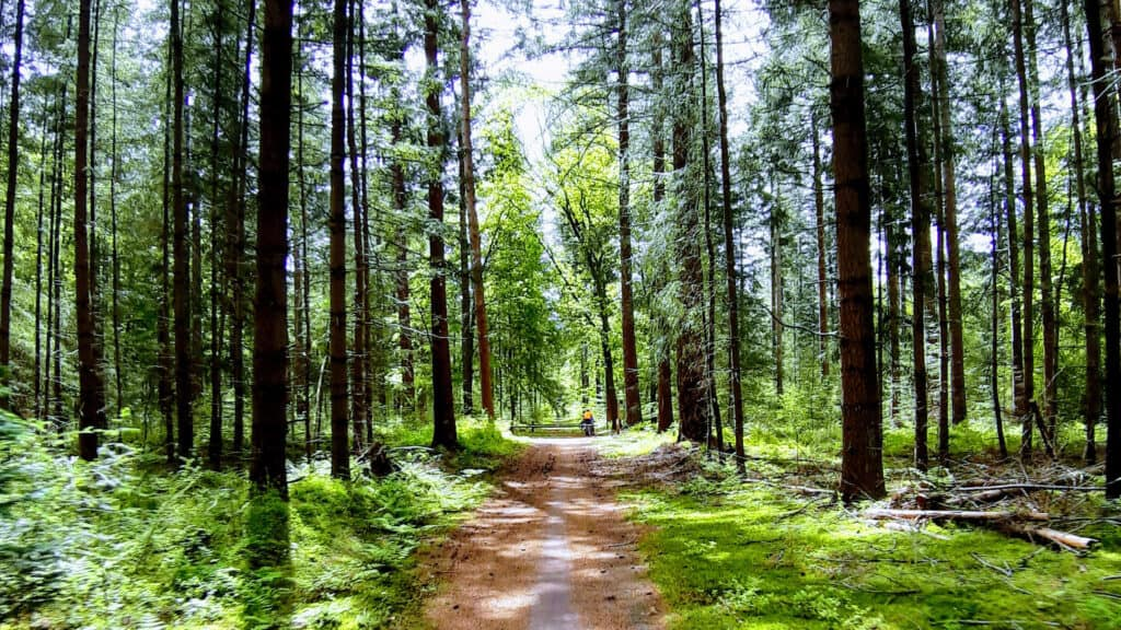Lemelerberg-wandelcoaching-natuur-dag-op-pad-cr