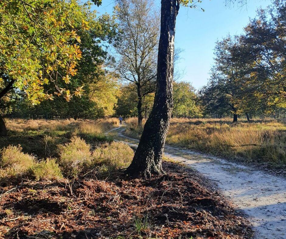 wandelcoach one day trail Krista van der horst praktijk voor coaching zwolle wandelcoaching natuurcoaching engelse werk lemelerberg